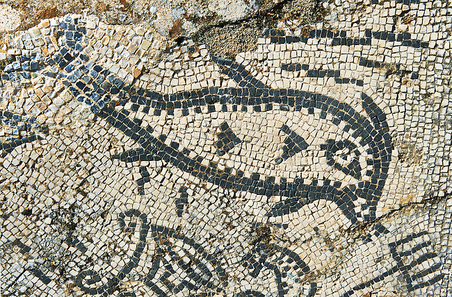 Roman mosaic of a fish. Volubilis Archaeological Site, near Meknes, Morocco