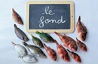 Europe/France/Provence-ALpes-Côte d'Azur/13/Bouches-du-Rhône/Marseille: Les éléments de la bouillabaisse de Gaby le pêcheur au bar des Goudes - Les poissons - Le fond