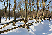 "Wooden fence near the Hartwell Tavern along the Battle Road at Minute Man National Historical Park in Lincoln, Massachusetts during the winter months. Originally built in 1732-1733, and restored by the National Park Service in the 1980s to its 18th-century appearance, the Hartwell Tavern was standing on April 19, 1775 (battles of Lexington and Concord, which marked the beginning of the American Revolutionary War). And because of this the National Park Service refers to this house as a ""witness house""."
