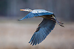 WILDLIFE / Bird Photography