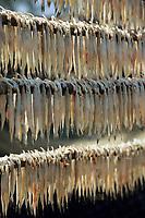 """Asie/Inde/Maharashtra/Bombay: Village de pêcheurs à Machimar Village les """"Bombay's Duck"""" poissons séchés"""