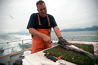 "150620-JRE-7981E-1251 The crew of Seward Fishing Club's ""Rainisong"" process fish after a successful trip for salmon and rockfish"