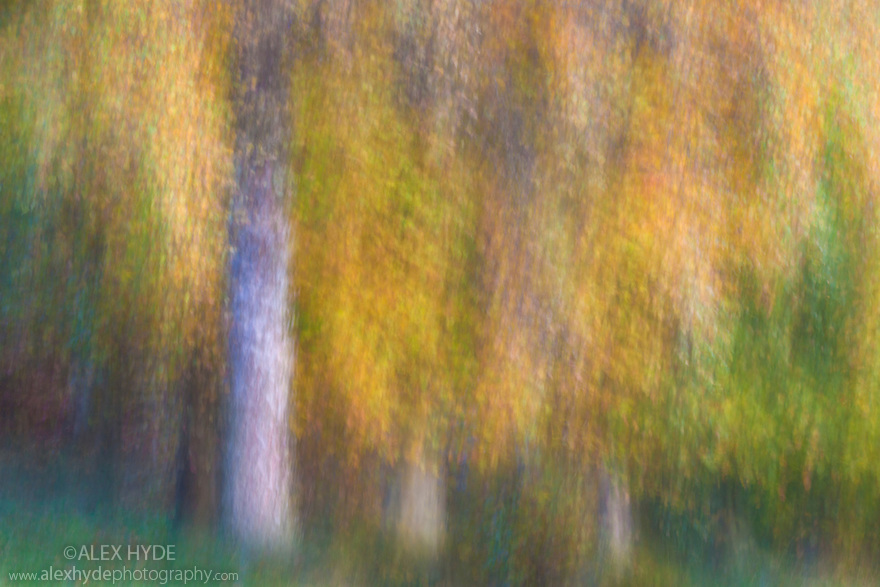 Long exposure abstract of birch trees in autumn, Peak District National Park, Derbyshire, UK. November.