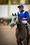 HALLANDALE FL - FEBRUARY 27: Mohaymen #6, ridden by Junior Alvarado returns to unsaddle after winning the Xpressbet.com Fountain of Youth Stakes at Gulfstream Park on February 27, 2016 in Hallandale, Florida.(Photo by Alex Evers/Eclipse Sportswire/Getty Images)