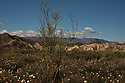 Spain - Andalusia - Panoramic view of the Tabernas Desert covered with spring flowers.
