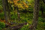 Magellanic deciduous forest in autumn, Torres del Paine National Park, Patagonia, Chile