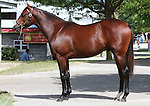 10 September 2011.Hip #84 Distorted Humor - Macoumba colt..