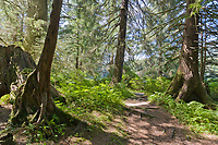 Pathway through old growth forest at Ward Lake recreation site, near Ketchikan, Alaska.