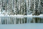 Wintery forest, Washington