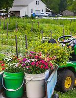 Buckets of local slow flowers flower farm;  The Gardeners Workshop in Newport News Virginia