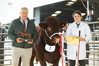 20.10.2018 Lincoln Red Autumn Show & Sale Newark Livestock Market