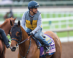ARCADIA, CA - NOV 01: American Gal, owned by Kaleem Shah, Inc. and trained by Bob Baffert, exercises in preparation for the Breeders' Cup 14 Hands Winery Juvenile Fillies at Santa Anita Park on November 1, 2016 in Arcadia, California. (Photo by Kazushi Ishida/Eclipse Sportswire/Breeders Cup)