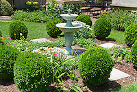 English formal style garden scene with house, double bird bath water fountain, Buxus boxwood trimmed into globes, Leucanthemum Shasta Daisies, Vinca, lawn grass, on sunny summer day, trees, beautiful backyard landscaping