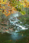 Autumn, Little Pigeon River, Greenbrier, Great Smoky Mountains NP