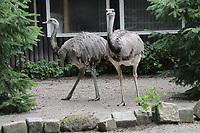 Nandu - Jaderberg 21.07.2020: Tier- und Freizeitpark Jaderpark
