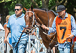 July 15 2021: Echo Zulu #7 in the paddock before the fifth race, a maiden special weight for two-year-olds at Saratoga Race Course in Saratoga Springs, N.Y. on July 15, 2021. Rob Simmons/Eclipse Sportswire/CSM