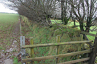 Wall and hedge protected by fencing.....Copyright John Eveson 01995 61280.j.r.eveson@btinternet.com