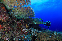 Scuba diver exploring a coral reef off New Britain Island, Papua New Guinea.