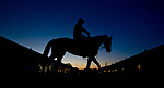 LOUISVILLE, KY - APRIL 29: A horse comes back from the track at sunrise after jogging during Kentucky Derby week at Churchill Downs on April 29, 2018 in Louisville, Kentucky.