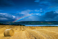 Hay Bales above the Cromarty Firth, Ross & Cromarty, Northwest Highlands