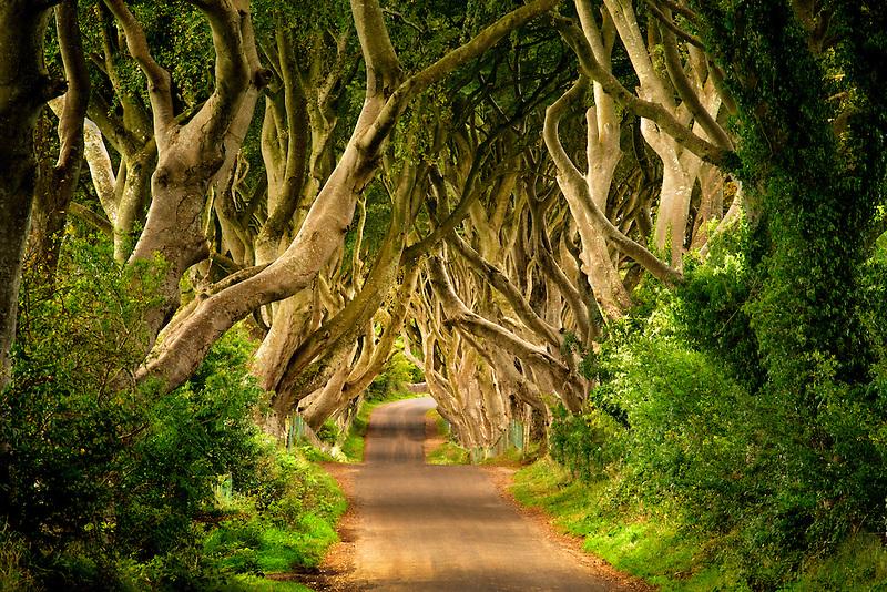 The Dark Hedges. Rural Beech tree lined road in Ireland.