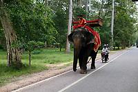 elephant, Siem Reap<br /> , Cambodia<br /> <br /> PHOTO :  Agence Quebec Presse<br /> <br /> <br /> <br /> <br /> <br /> PHOTO : Agence Quebec Presse