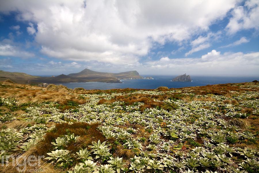 Campbell Island Landscape