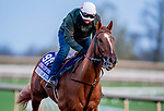 November 1, 2020: Second Of July, trained by trainer Philip A. Gleaves, exercises in preparation for the Breeders' Cup Juvenile Turf Sprint at Keeneland Racetrack in Lexington, Kentucky on November 1, 2020. Scott Serio/Eclipse Sportswire/Breeders Cup /CSM