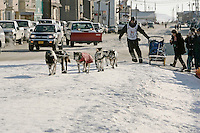 Friday March 16, 2007  - Nome, Alaska ----  Rookie Tom Lesatz runs inot the finish chute on Front street arriving at the finish line in Nome in 39th place.