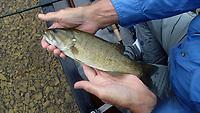 Smallmouth bass were in a mood to bite Sept. 11 2020 on the Elk River.<br />(NWA Democrat-Gazette/Flip Putthoff)