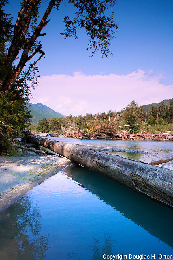 The powerful Hoh River charges down from the high Olympic Mountains. Olympic National Park, carrying downed trees that eventually end up as ocean drift..  Olympic Penninsula, Washington.  Outdoor Adventure. Olympic Peninsula