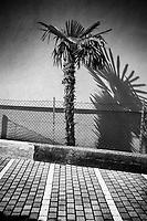 Switzerland. Canton Ticino. Lugano. A palm tree on an empty parking lot. 24.03.2020 © 2020 Didier Ruef