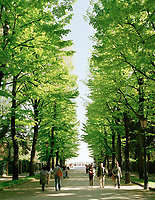 Spring leaves on trees lining the Via Giuseppe Garibaldi in the Giardini Pubblici, Venice. Begun under Napoleon as the city's first public green space, these leafy gardens are now the main home of the Biennale.