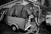 Switzerland. Canton Ticino. Vaglio. A giant plastic elephant stands up in a trailer parked along the road. Elephants are mammals of the family Elephantidae and the largest existing land animals. Three species are currently recognised: the African bush elephant, the African forest elephant, and the Asian elephant. Elephantidae is the only surviving family of the order Proboscide. Vaglio is a village and former municipality. In 2001 the municipality was merged with the neighboring municipalities of Cagiallo, Lopagno, Roveredo, Sala Capriasca, and Tesserete to form a new municipality, Capriasca. 10.04.20 © 2020 Didier Ruef