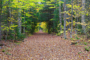Lincoln Woods Trail in Lincoln, New Hampshire during the autumn months. This trail follows the old East Branch & Lincoln Railroad (1893-1948) bed, and because it is flat, it attracts many hikers and walkers. Great care was put into the building of the EB&L Railroad, and many sections of it are flat and straight for miles.