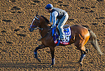 October 27, 2014: Mr. Sexy exercises in preparation for the Breeders' Cup Distaff at Santa Anita Race Course in Arcadia, California on October 27, 2014. John Voorhees/ESW/CSM