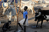SOUTH SUDAN Bahr al Ghazal region , Lakes State, village Yeri cattle camp near Rumbek, Dinka children with Zebu cow / SUED-SUDAN  Bahr el Ghazal region , Lakes State, Dorf Yeri, Dinka Kinder mit Zebu Rindern im cattle camp bei Rumbek