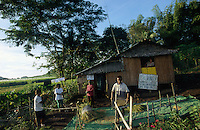 jbo70157 agriculture food crops paddy organic rice farming with SRI method System of rice intensification family woman trash paddy after harvest yield by feet foot in village Barangay Antipolo on Negros Philipines asia<br />