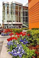 Beds of pansies and tulips bloom near the Knight Theater in downtown Charlotte, NC. The theater is one of six theaters within the North Carolina Blumenthal Performing Arts Center.