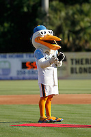 Myrtle Beach Pelicans mascot Splash Pelican on the field before a game against the Carolina Mudcats at Ticketreturn.com Field at Pelicans Ballpark on June 7, 2015 in Myrtle Beach, South Carolina. Myrtle Beach defeated Carolina 4-1. (Robert Gurganus/Four Seam Images)