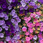 A beautiful flower bouquet hangs in Missoula, Montana