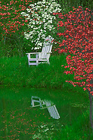 White adirondack chair in grass on dam of lack as spring dogwood trees bloom