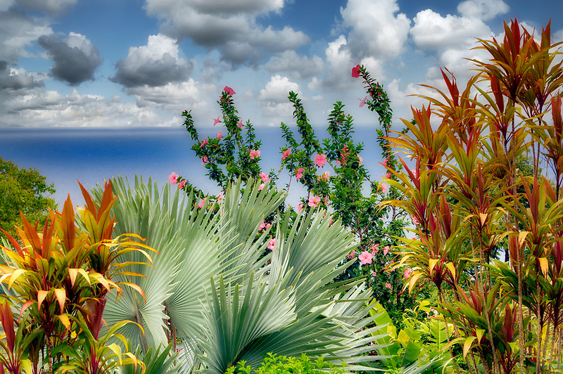 Hybiscus and palm tree with ocean. Garden of Eden Botanical Gardens. Maui. Hawaii