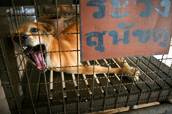 The Home for Disabled Dogs in Bangkok. Set up to care for crippled and abandoned dogs, many of them left after road accidents, the home looks, sounds and stinks like canine hell.