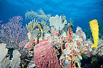 Southwest Caye Wall Dive Site, Glover's Reef Marine Reserve, Belize, Central America; a coral reef scene with sponges, hard and soft corals, sea fans, sea rods and small fish , Copyright © Matthew Meier, matthewmeierphoto.com All Rights Reserved