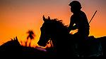 January 21, 2021: A horse jogs in the pre dawn light as horses prepare for the 2021 Pegasus World Cup Invitational at Gulfstream Park in Hallandale Beach, Florida. Scott Serio/Eclipse Sportswire/CSM