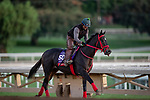 OCT 25: Breeders' Cup Sprint entrant Shancelot, trained by Jorge Navarro, gallops at Santa Anita Park in Arcadia, California on Oct 25, 2019. Evers/Eclipse Sportswire/Breeders' Cup