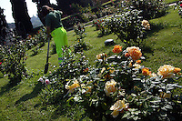 Il Roseto Comunale si affaccia sul Circo Massimo. In un'area di circa 10.000 metri quadrati si trovano circa 1.100 diverse specie di rose. Il parco è aperto al pubblico da maggio. Nel 1950 il comune, con il consenso della comunità ebraica, decise di ricreare il roseto nell'area attuale, che aveva ospitato dal 1645 il cimitero ebraico, spostato nel 1934 in un settore del cimitero del Verano. .Municipal rose garden is near Circo Massimo. In an area of 10,000 square meters are located about 1,100 different species of roses. The park is open to the public by May. In this place since 1645 was the Jewish cemetery. .In 1934 he was moved to an area of the cemetery of Verano. .After the war, in 1950 the town, with the consent of the Jewish community, decided to recreate the rose garden. ...
