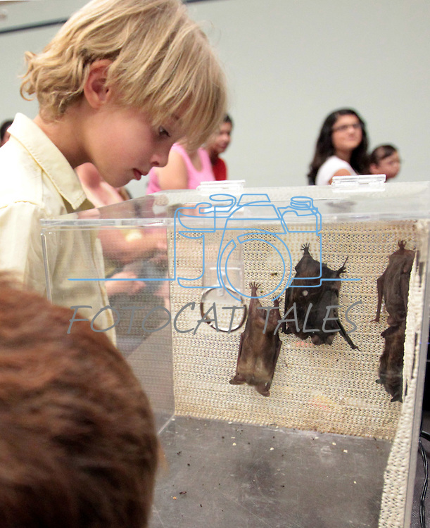"""Brayden Teachout, 6, looks at bats during the NorCal Bats presentation at the Carson City Library on Saturday afternoon. The event was part of the Summer Reading Program, """"Dream Big, Read!"""".Photo by Cathleen Allison"""