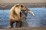 Bears battle for fish by Kevin Dooley